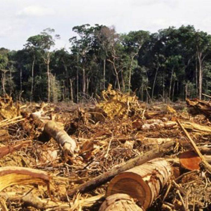 Perjuicio Ecológico